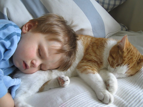 puppies and kittens sleeping. Kitten pillows: the only way