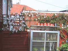 DSC00567 (wagitail) Tags: garden mayflowers