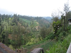 Hillside Farms (Not Lost) Tags: indonesia 2008 mountbromo