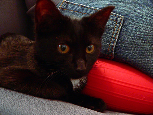 new cat 4