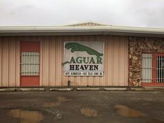 El Jefe Graveyard (misterbigidea) Tags: business landscape industrial city urban decay typographic signsofthetimes sign auto dismantled jaguar green puddle dismantler luxury parts used