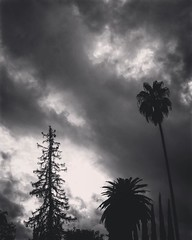 Stormy Day, Los Angeles The rain clouds backdrop the neighborhood trees during a short break in the rain. #LA #losangeles #california #ig_losangeles #wheream_I_LA #insta_losangeles #cali_grammers #lagrammers #losangelesgrammers #discoverla #conquer_la #un (dewelch) Tags: ifttt instagram stormy day los angeles the rain clouds backdrop neighborhood trees during short break la losangeles california iglosangeles whereamila instalosangeles caligrammers lagrammers losangelesgrammers discoverla conquerla unlimitedlosangeles californiacaptures uglagrammers blackandwhite blackandwhitephotography bnwdrama bnwlegit bnwcaptures gfbnw bnwmaster ignaturelovers ignaturepictures ignaturesbest 24earth