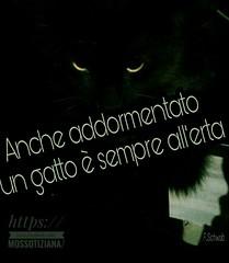 https://www.facebook.com/MossoTiziana/ #Tiziana #Mosso #Tizi #Twister #Titty #lovecat #cat #love #link #page #facebook #aforisma #citazione #frase #buongiornoatutti #buonpomeriggio #buonaserata #buonanotte #atutti #adomani #Fred #Schwab #addormentato #all (tizianamosso) Tags: citazione schwab adomani tiziana link all addormentato lovecat titty facebook twister tizi mosso love buonpomeriggio buonanotte fred buongiornoatutti frase atutti buonaserata page aforisma cat