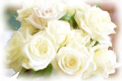 oil roses II