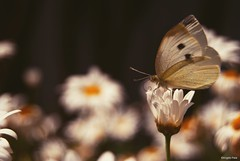 Lightness (Angelo Raia) Tags: light plants flower verde green foglie butterfly nikon colori luce lightness raia farfalle natureslight anawesomeshot d3000 nikond3000 angeloraia