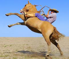Apontando o rumo (Eduardo Amorim) Tags: brazil horses horse southamerica brasil caballo cheval caballos cavalos pelotas pferde cavalli cavallo cavalo gauchos pferd riograndedosul pampa hest hevonen campanha brsil chevaux gaucho  amricadosul hst gacho  amriquedusud  gachos  sudamrica suramrica amricadelsur  sdamerika jineteada supershot   costadoce americadelsud gineteada platinumphoto anawesomeshot  onlyyourbestshots americameridionale campeiros favemegroup3 diamondclassphotographer searchandreward campeiro eduardoamorim
