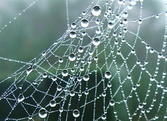 Pearls on web (Anne*) Tags: fall nature automne spider bravo belgium belgique web belgi drop pearls explore dew pearl bec waterdrops goutte 2007 araigne toile nationalgeographic smorgasbord wallonie rose aworkofart magicdonkey passionphotography bigfave 200750plusfaves 66faves firsttheearth thatsclassy naturewatcher thegoldendreams excapturemacro obq annedhuart