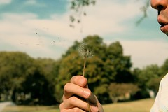 (shiftshaping) Tags: flower forest mouth duck pond fingers blowing blow dandelion