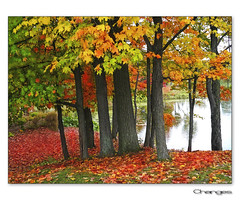 Changes (Ms Ladyred) Tags: autumn trees red orange reflection green fall nature water gold quiet peaceful serene changes aplusphoto abeautifulautumnday thegoldenmermaid
