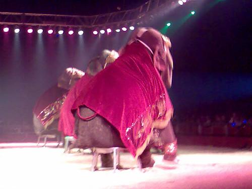 Elefantes en el Circo Americano de Las Ventas