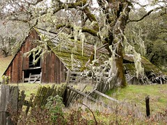 Wounded Barn (judi berdis) Tags: usa barn nca willits mendocinocounty rt20 beautyintheeyeofthebeholder mm3000 explore49411262007