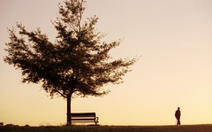 One man and his.... bench? (Trapac) Tags: uk autumn trees sunset england man max film silhouette bench downs bristol kodak nikkor50mmf18 clifton 400iso nikonf80 thedowns wmh kodakmax bristoldowns explored cliftondown flickrcollectionongetty
