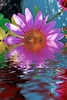 Spring colors.jpg (jodi_tripp) Tags: xmas pink house flower reflection fall halloween water day taken allrightsreserved flooded melindas joditripp wwwjoditrippcom photographybyjodtripp joditrippcom