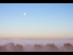 moon over mist (Sabinche) Tags: trees moon mist nature germany bravo searchthebest thuringia explore interestingness9 rhn sabinche rhoen interestigness fineartphotos diamondclassphotographer flickrdiamond merrychristmasdearfriend ilovetherhoen explore25122007