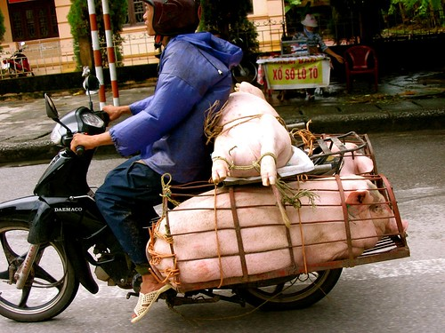 Pigs on Wheels 2