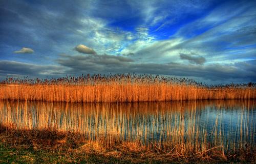 Wetlands Country