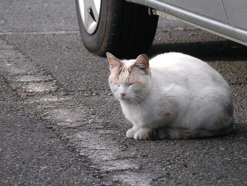 これ「今日の猫」?
