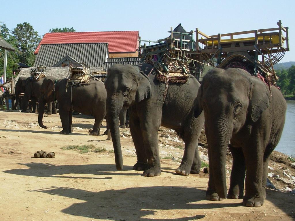 Chiang Mai-Chiang Rai (84)