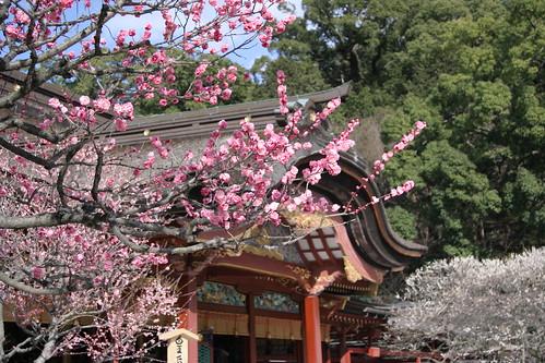 ume(plum blossom)