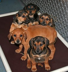 Puppies shouldn´t be in a shelter