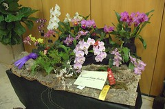 Ironwood Estates Orchids Display