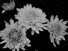 \ "