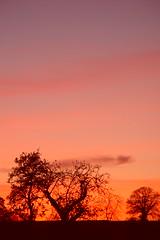 Sunset over old apple orchard (Cymraes Gwyllt) Tags: uk sunset orchard abigfave keltsrus