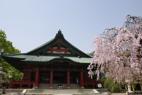 Sakura-Donryu