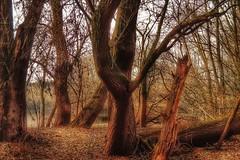 Nature's romance (yve_all) Tags: natur nature trees bäume licht light farben colours romantik romantic blickwinkel view