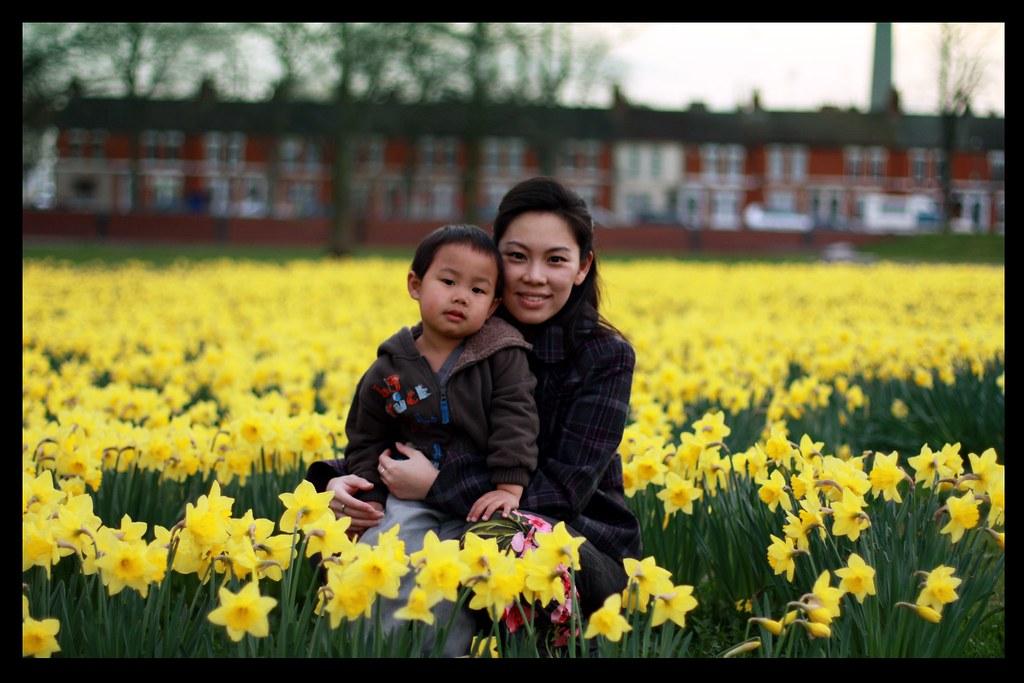 daffodil8