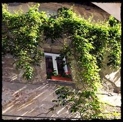 Affacciati alla finestra... (relisa) Tags: window ventana italia finestra toscana grosseto fenetre maremma pitigliano