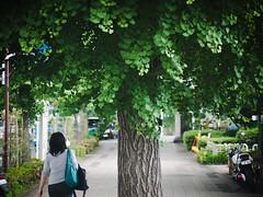 The center of the road (kasa51) Tags: tree japan lumix tokyo ginkgo cityscape panasonic   f25 angenieux 75mm gf1 cmount