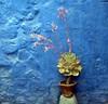 Peru - Stesso colore, altro mondo! (danieleb80) Tags: flowers blue peru southamerica wall blu arequipa blueribbonwinner inblu instantfave 35faves 25faves aplusphoto goldenphotographer somethingblueinmylife colourartaward excapture canoniani santacatilina