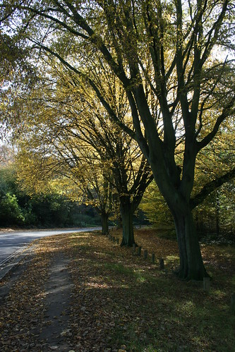 Road Lined with Autumnal Trees