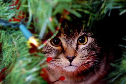 kotě o vánocích vánoční stromek kočka