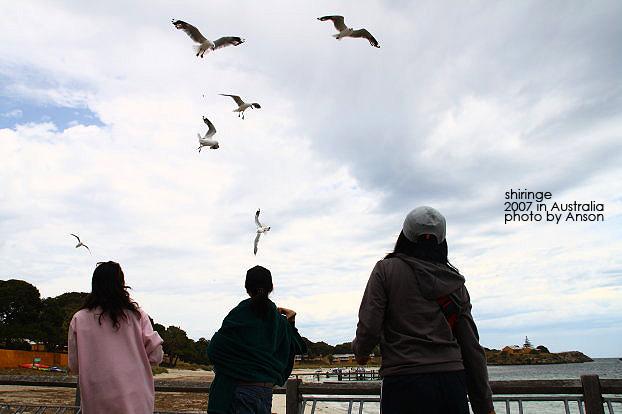 餵海鷗是不可以的哦!