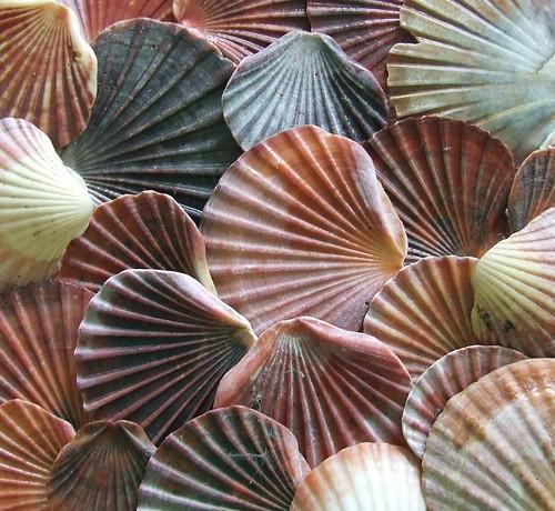 * Shells *