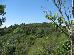 IMG_3147 (stevenfeuerstein) Tags: newzealand auckland volcanic rangitoto