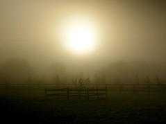 early morning mist (alternativefocus) Tags: mist fog sunrise pentax earlymorning atmosphere earlymorningmist pentaxk10d alternativefocus