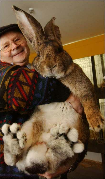 One Big Bunny