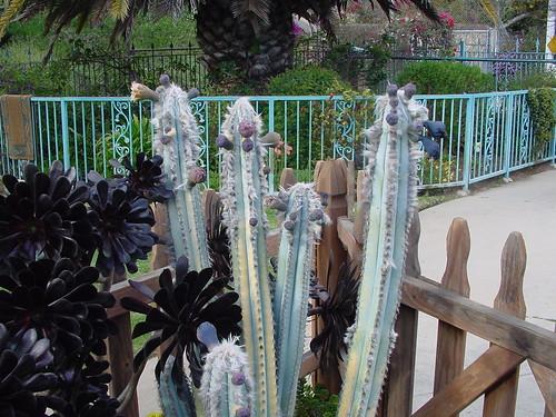 THAT cactus....