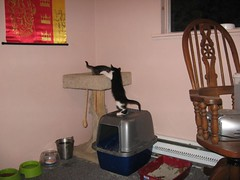 11-24-07 486 (teribul_teri) Tags: cat play kittens cuties