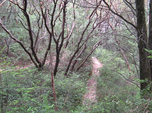 Out of the redwoods, into the madrone