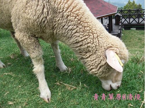 青青草原CIMG2726