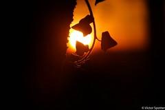 Sunset (Viictor B) Tags: photography photographie beautiful wonferful unic canon sun sunset sunrise sunshine nature landscape wildlife cloud clouds tree trees twilight red yellow leaves