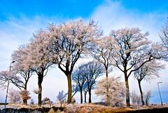 Hoar Frost Feb 08 (kathbonson) Tags: trees england tree ice weather nikon frost bradford britain hoarfrost yorkshire winterwinterhiver nikond80