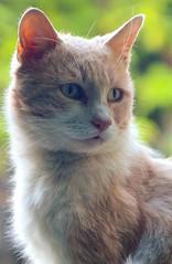 PiGio (Germano Pozzati) Tags: camera old cats cat 35mm lens nikon d70 zoom 28 nikkor 35 70 gatto gatti f28 70mm 3570 f28d 28d kissablekat 35mm70mm