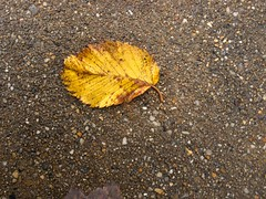Yellow Leaf on Sidewalk