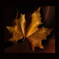 Fall is here (makunia) Tags: bravo searchthebest yikes superfriends tagtag blueribbonwinner keepsmiling magicdonkey whosaidthat xoxoxoxox xxxxxxxxxxxxxxxxxxxxxxx superaplus aplusphoto supermaria nitexxxxxxxx beijinhoooss thegardenofzen ♥♥♥♥♥♥♥♥♥♥♥♥♥♥♥♥♥♥♥♥♥♥♥♥♥♥♥ omgspectacular beautifulgoldenpearls muchmorehugsandkissedtoyou whoaskedaboutaskingabouttags apearlwonder noiaskedaboutthetaggerofthetaggerofthetagger thatsmileyisfamiliarwhoaskisshashdaytoday whoaskthetaggerofthetaginthetaggertag ravknavertobirotsaargindamushaoba theidentityoftheaskerofthetaggerofthetagofthetaggertagshallremainamysterytoallbutthetaggerandtherecipientp themaskedtaggerwashere istartedtoasknoyoustartedandihasgoneon thetaggerofthetaghastaggedwhoaskthetaggerwhotagstillamystery ohhhevenmeconfusedbrrrr okillcheckitnow omgsurelynotyoudontmeannogreyscale whosaidwhothetaggerwhotagwho looklookandwhenuseeletmeknowabout meeeeeeeomg whoismeeeeeeeethehotchocolateeeladeeisthetaggerwhotaggedthistag btw2x2not5andnot22thesearetwoswans whotag2x2not5andnot22isthisthemaskedtaggerwhotaggedsomanytags yesuarerightbutwhoasked noothemaskedtaggerishidinghere 2tagornottwotagthatisthequestion hugsfrommetooooooo twofromshashtwofrommeandtwofromcookie 224forme 225whenitisabouthugs whowrotetheabouttagp whoaskedabouttag shashaskabouttaglolgethimintotrouble mostesthugsandkissestoyou itsmewhoaskedabouttagoftagguessed isitpickonshashday xvevnebidakotsnebi themasktaggerisatiggerwhohasadaggerandisindangerofbeingtagged mewoulduliketoknowthename uarenearalongtheonewhotagthetagabout loveyouallnomatterwhoistaggingwhatandwhy imveryfarwhoaddthetagwhoaskthetaggerwhowrotethetag heeeyuwillseetaggeronthelefthandofthetag 2x2isalso5whenitisabouthugs 2x2is22whosaidis5 whoisthetaggerofthe5whotaginhereisthetagger ifyouaddtreelinesoftagsyouwillmissthetagger andfriendlyswansforsure thanksforthesooomuchlaughandmoodkindestregardsfromtagger lolisthisachatprogram againbeijinhoooosss —obramaestra—