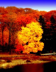 Echo Lake - West Milford NJ (MBH Pa) Tags: autumn trees tree nature digital canon newjersey fallfoliage canonrebel favs soe echolake naturesfinest greatphotographers splendiferous supershot bestlandscape 20favs flickrsbest xti treephotos golddragon abigfave canonrebelxti shieldofexcellence bestnature autumnscenery autumnlandscapes autumnlandscape platinumphoto anawesomeshot aplusphoto bestlandscapes flickrenvy flickrbronze superbmasterpiece diamondclassphotographer flickrdiamond excellentphotographerawards colourartaward platinumheartaward artlegacy betterthangood theperfectphotographer top20autumn coloursplosion goldstaraward clevercreativecaptures unlimitedphotos exquisiteimage echolakenj showmeyourqualitypixels goldenheartaward fallfoliageinpennsylvania fallfoliageinpa thebestscenery